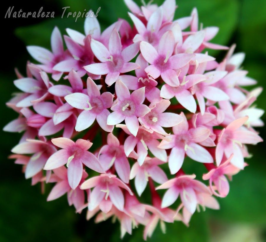 8 plantas que florecen todo el año en macetas ¡Increíbles!