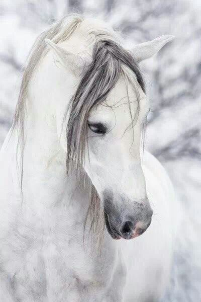 horses | Nature\'s Beauty | Pinterest | Caballos, Elegancia y Belleza