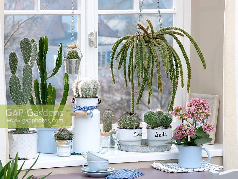 arredare con le piante Piante, Piante da interno e