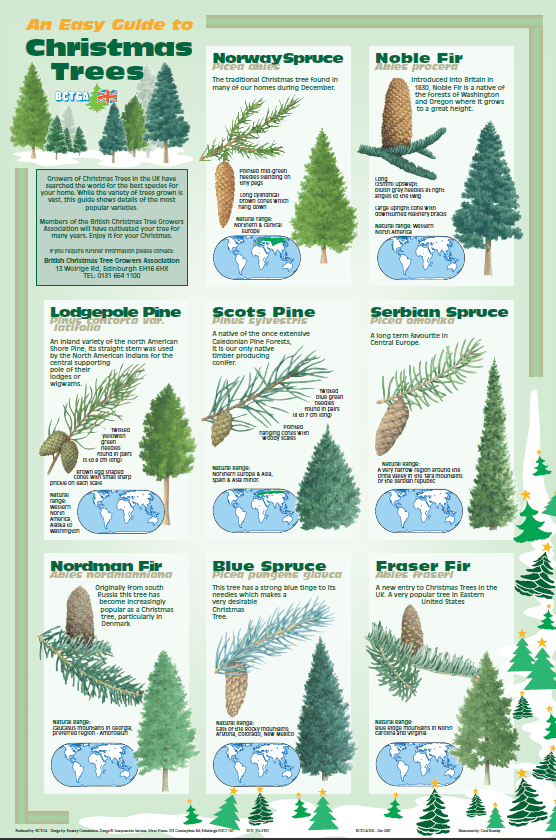 Trees Europe Christmas Tree Evergreen Google Sogning