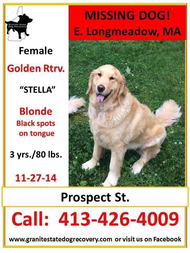 **NEW FLYER/CHANGE OF DOG'S NAME** Missing Female Golden