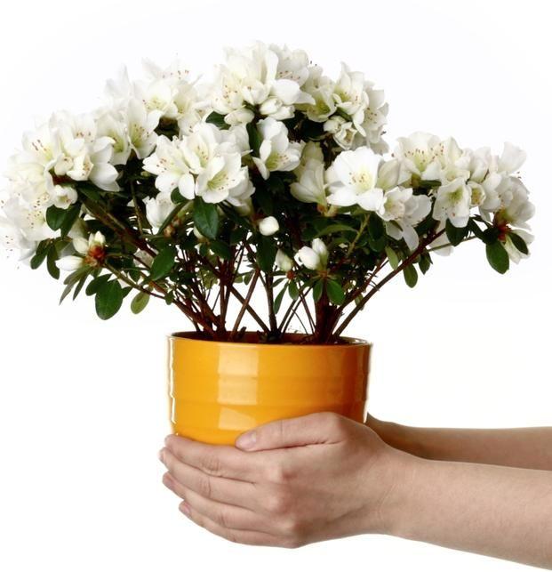 Dlaczego Warto Miec W Domu Rosliny Doniczkowe Plants Flowers