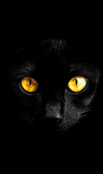 Max Beautiful Black Cat And Amazing Yellow Eyes Intrasting Black Background Cat Wallpaper Cat Background Yellow Cat