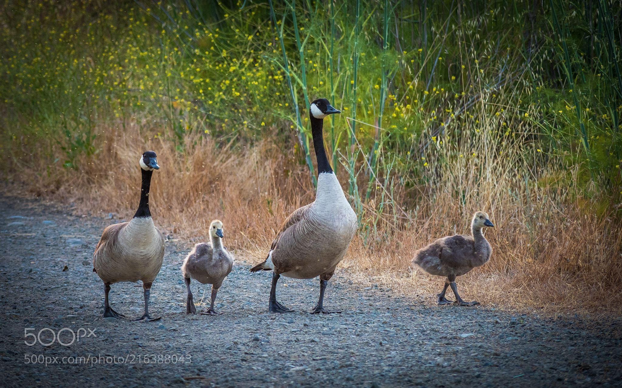 №410 (Konstantin Mart / San Jose / United States) #Canon EOS 5D Mark III #animals #photo #nature