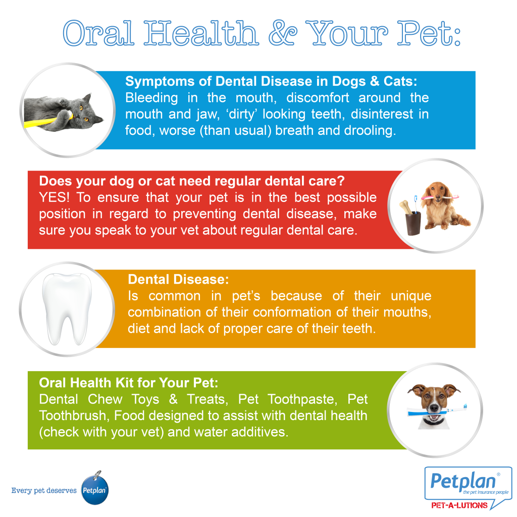Pet Oral Health Infographic From Petplan Pet Insurance Australia Pet Health Insurance Pet Wellness Oral Health