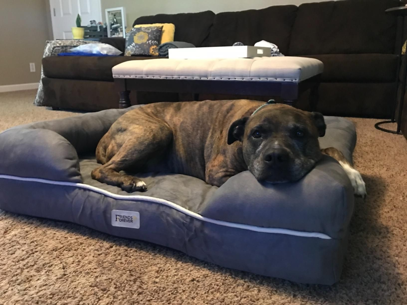 Soft Removable Cover Is Durable And Machine Washable You Can Remove The Cover Anytime With The Ykk Pure Metal Zippers And Cool Dog Beds Dog Bed Diy Dog Bed Dog beds with zipper covers