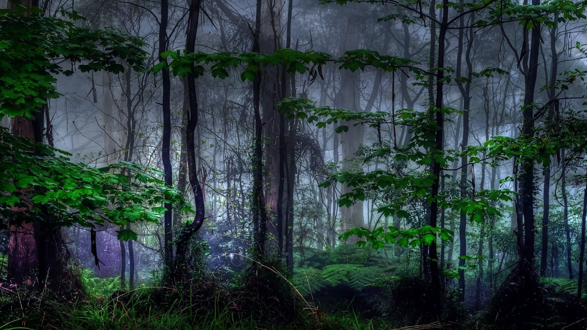 Dark Nature Wallpapers Full Hd Forest Wallpaper Dark Tree Nature Wallpaper