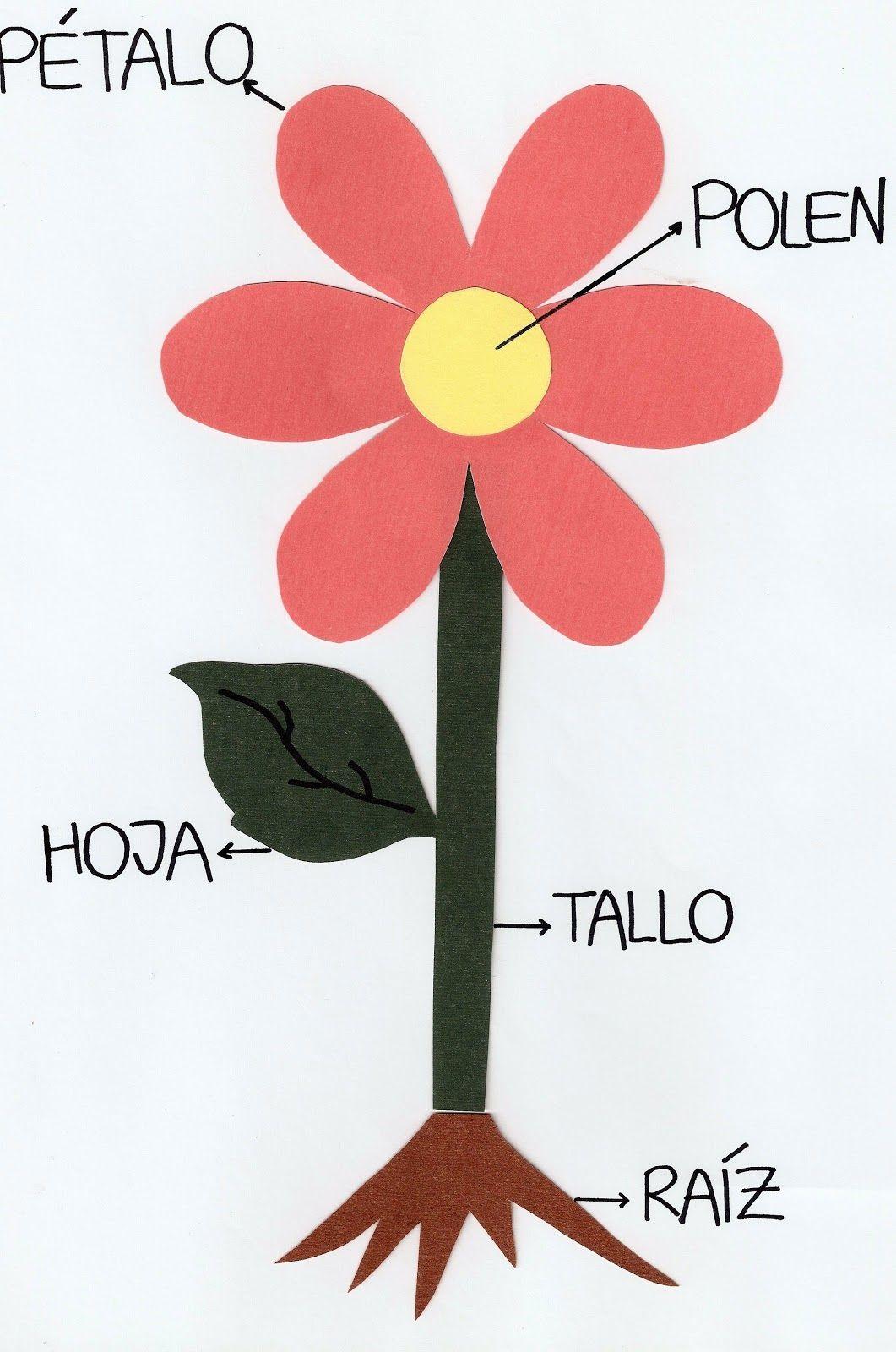 Partes De Una Flor | Proyecto. Flores | Pinterest | Etiquetas