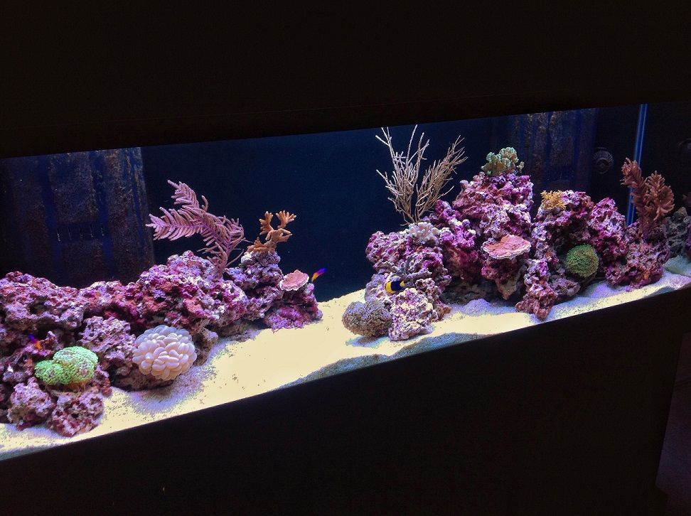 Tips And Tricks On Creating Amazing Aquascapes   Page 56   Reef Central  Online Community