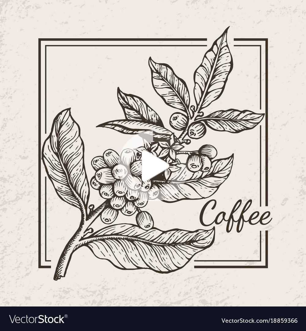Coffee berries twig icon Royalty Free Vector Image in 2020
