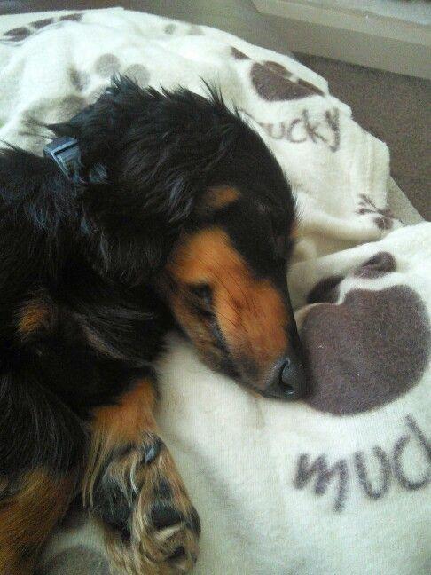 Freddie having a snooze
