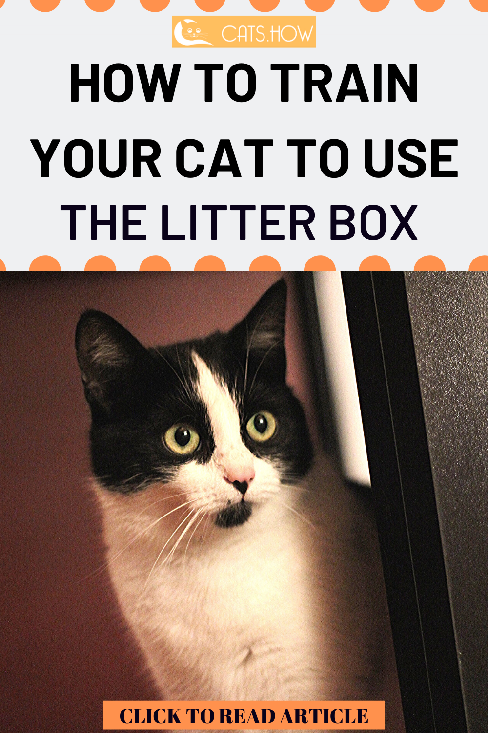 How To Train Your Cat To Use The Litter Box Litter Box Cat Behavior Cats