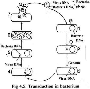 RBSE Solutions for Class 11 Biology Chapter 4 Kingdom