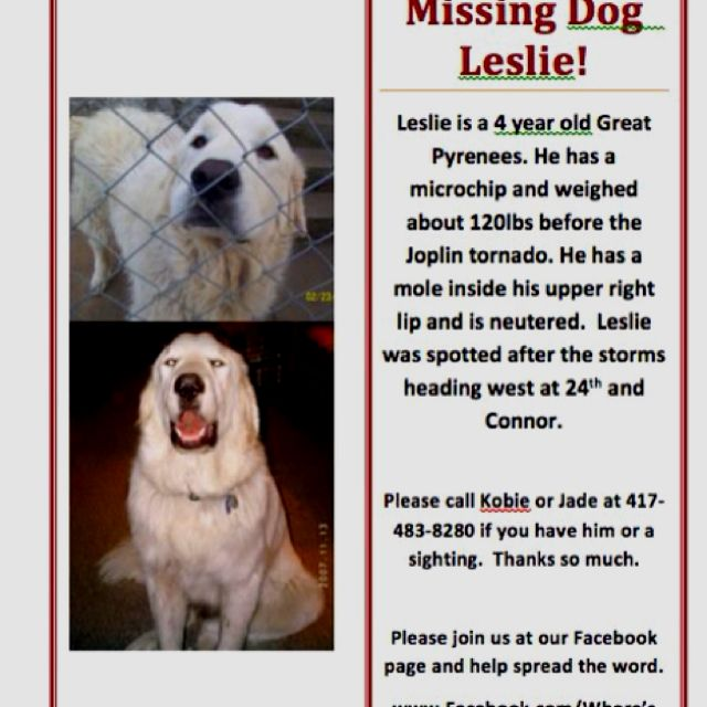 Missing Dog Alert Have You Seen Leslie Dogs Great Pyrenees