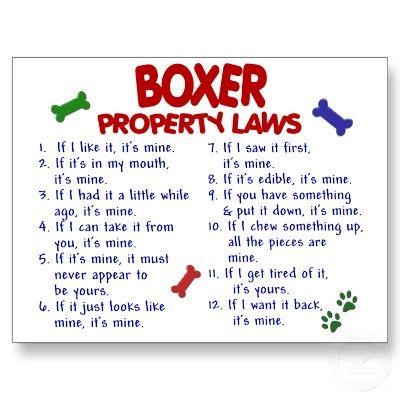 Boxer Rules!!! so true!!!