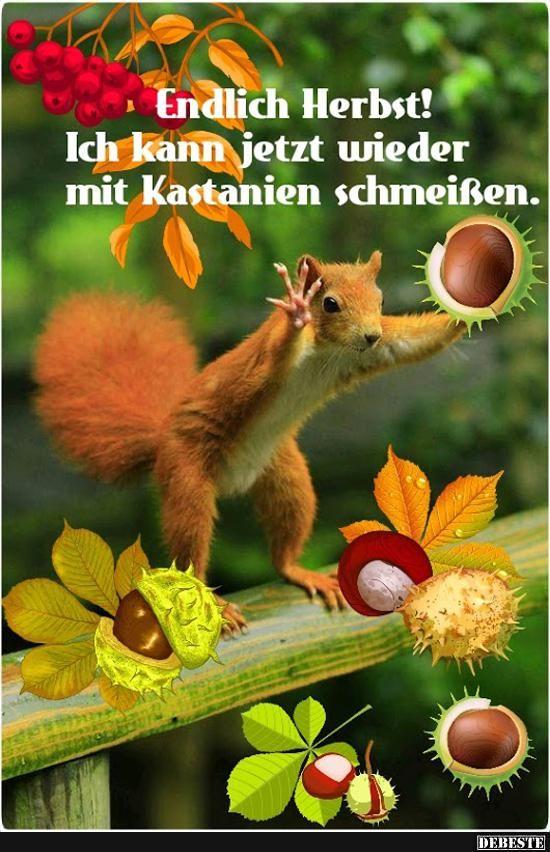 Endlich Herbst! (mit Bildern) | Herbst lustig, Lustige ...