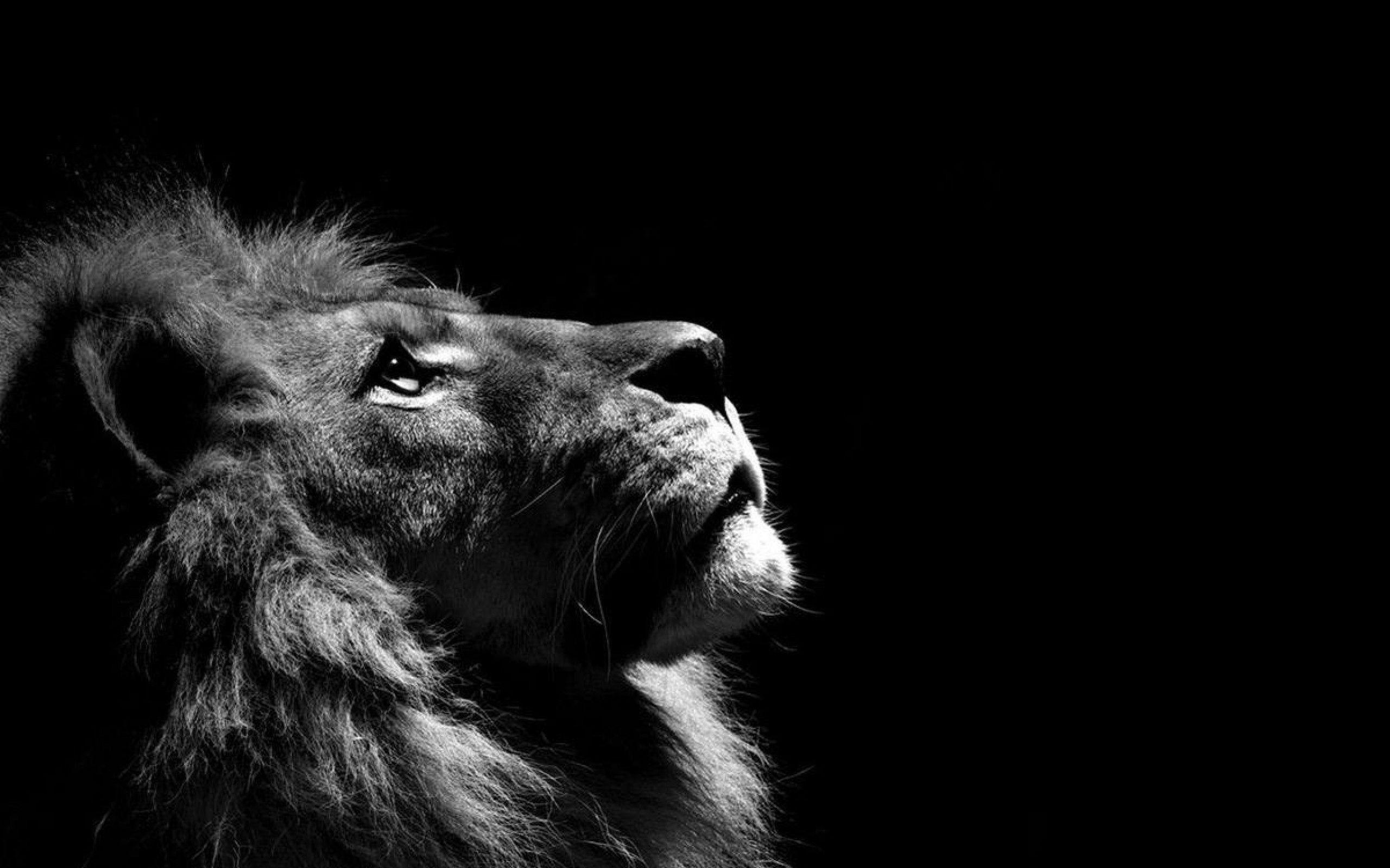Unduh 75 Wallpaper Hd Lion Gratis