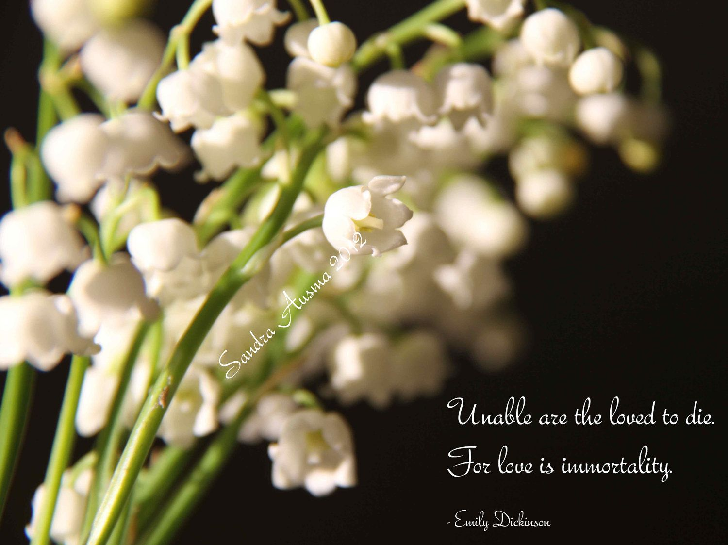 Lily of the Valley Sympathy Card with by