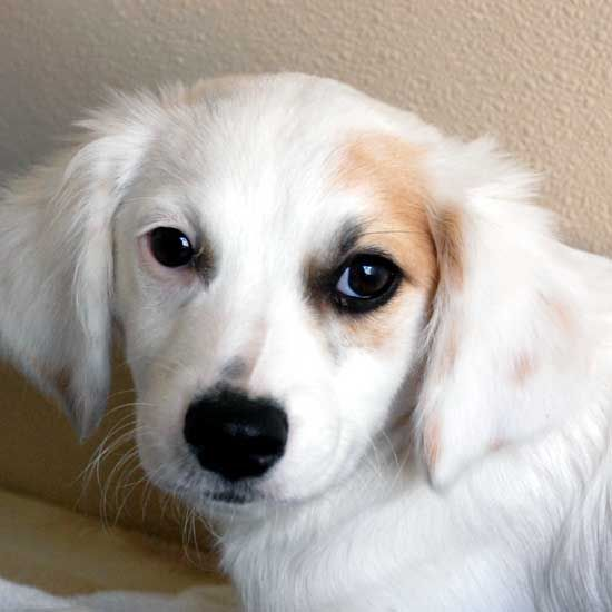 Adopt A Pet With Images Dog Adoption Pet Adoption Cat Adoption