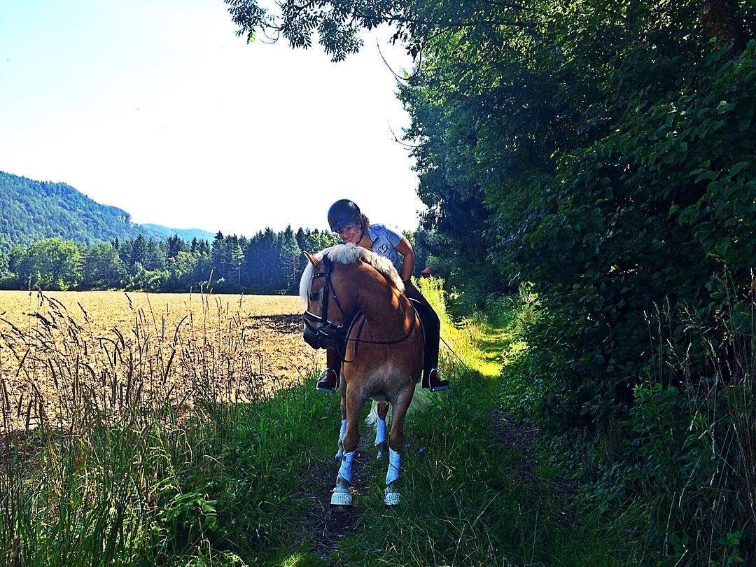 Love it  #hafl #horses #dressage #haflingersofinstagram #haflinger #horsesofinstagram #relax #saturday #sun