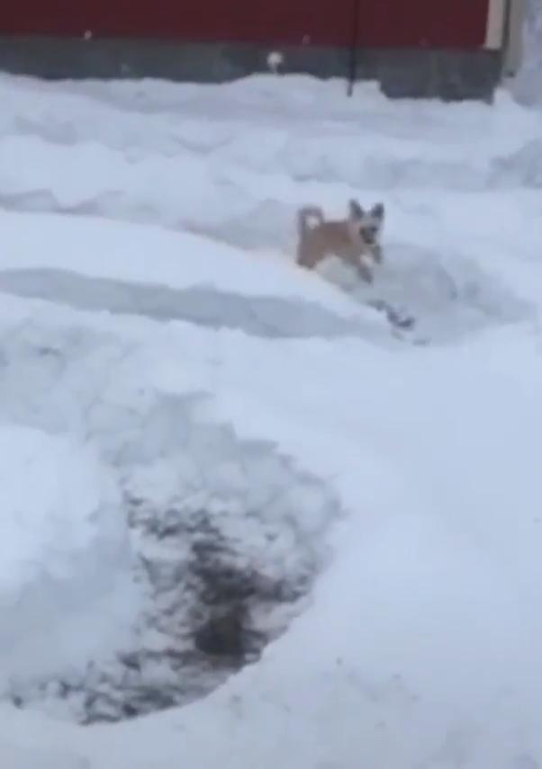 Photo of Snow Zoomies