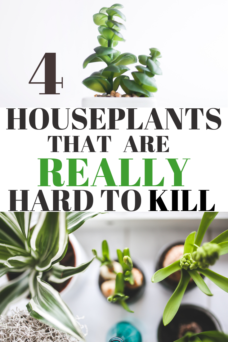 Best Inexpensive Houseplants For Busy People Super Easy To Care Indoor Plants That Will