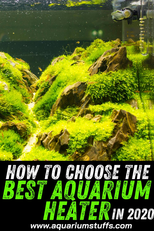 How to Choose the Best Aquarium Heater in 2020