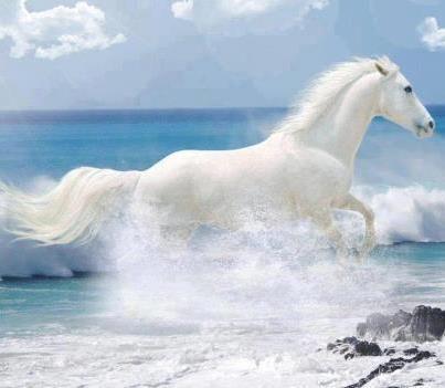Lovely Gemalte Pferde Mutter Natur Kostenlos Pretty Horses Sch ne Pferde Sch ne Orte Wellen Pferdest lle Sch ne Lebewesen