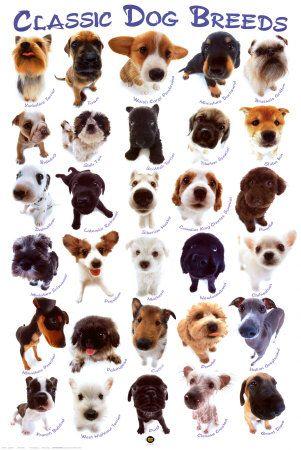 Most Common Dogs Goldenacresdogs