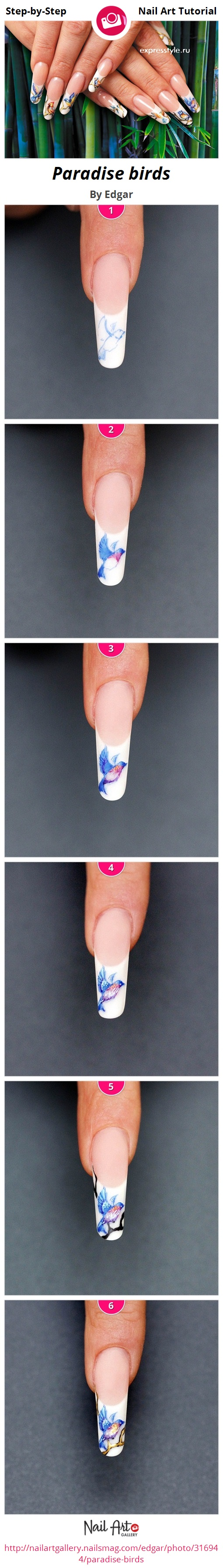 Paradise birds by Edgar - Nail Art Gallery Step-by-Step Tutorials ...