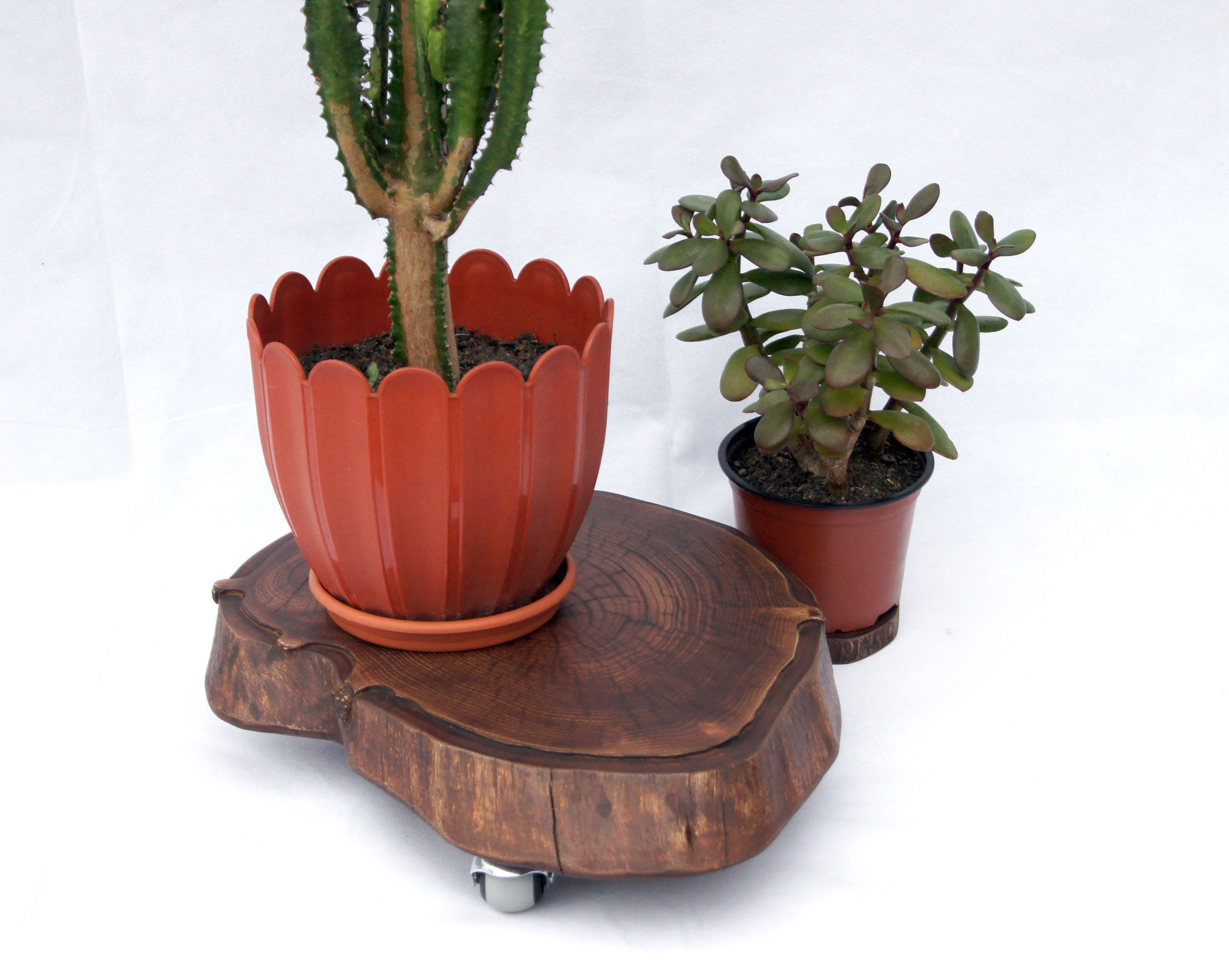 Live Edge Wood Slab Plant Stand Wth Wheels Large Plant Stand Indoor Tree Stump Planter Stand Wooden Pla In 2020 Plant Stand Indoor Painted Plant Pots Large Flower Pots