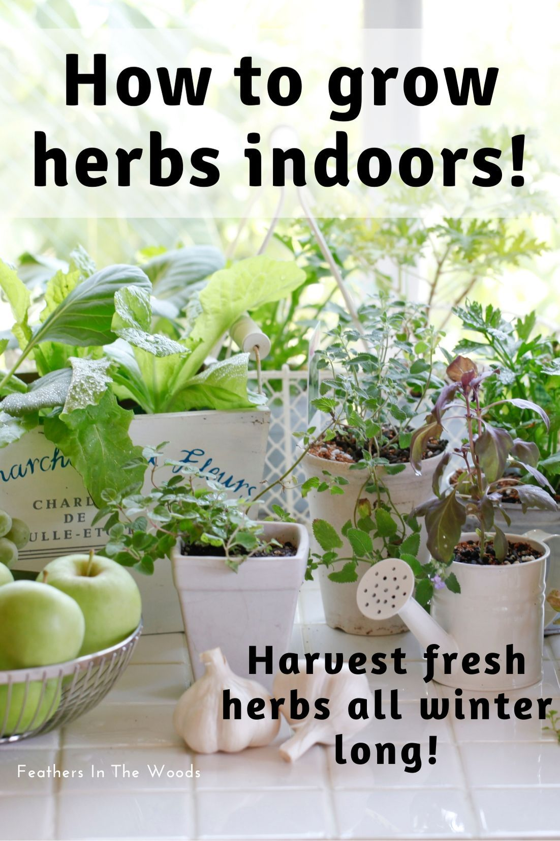 Growing Herbs Indoors Growing Herbs Indoors Herbs Indoors