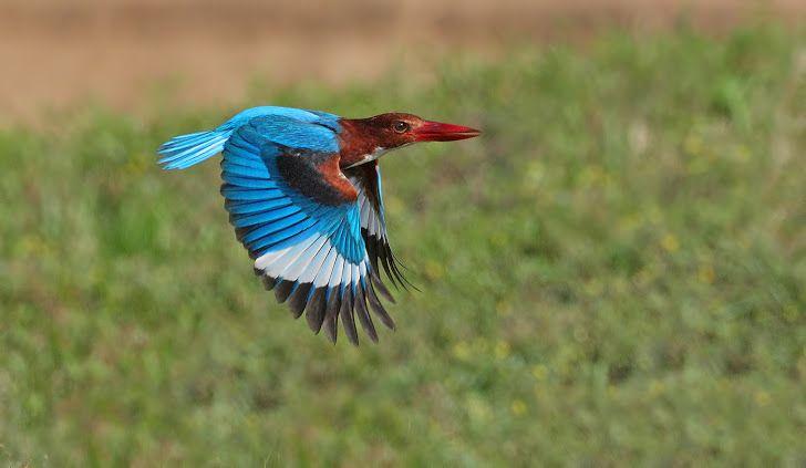 Malaysian Wildlife Photography