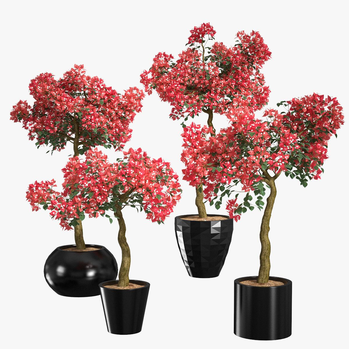 3d model set bougainvillea trees 1   Неделя 17- деревья ...