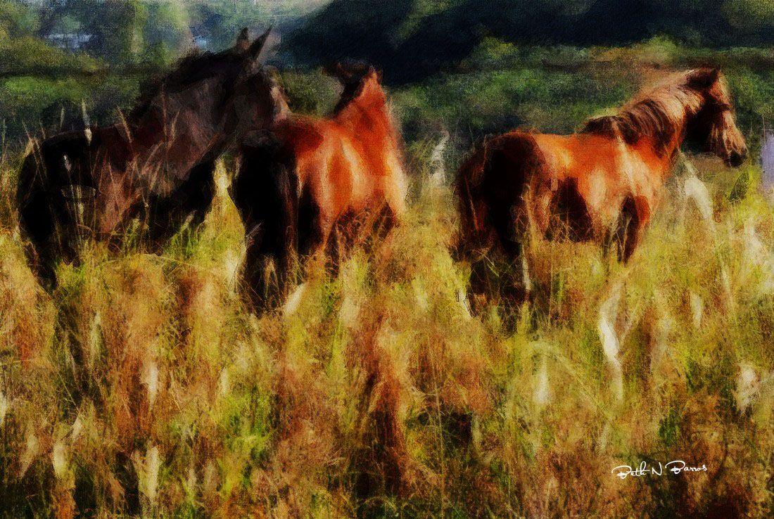 Horses Elizabeth Barros Pinturas