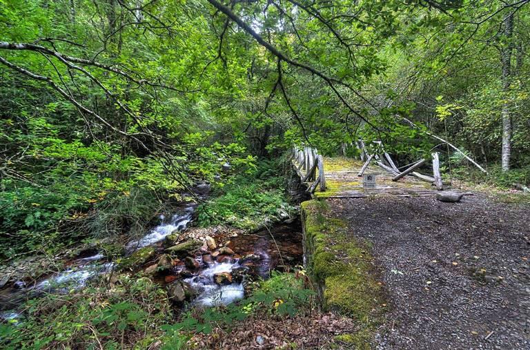 13 Bosques Antiguos Y Hermosos Para Darte Un Baño De Salud Shinrin Yoku Bosques De España Selva De Irati Bosque