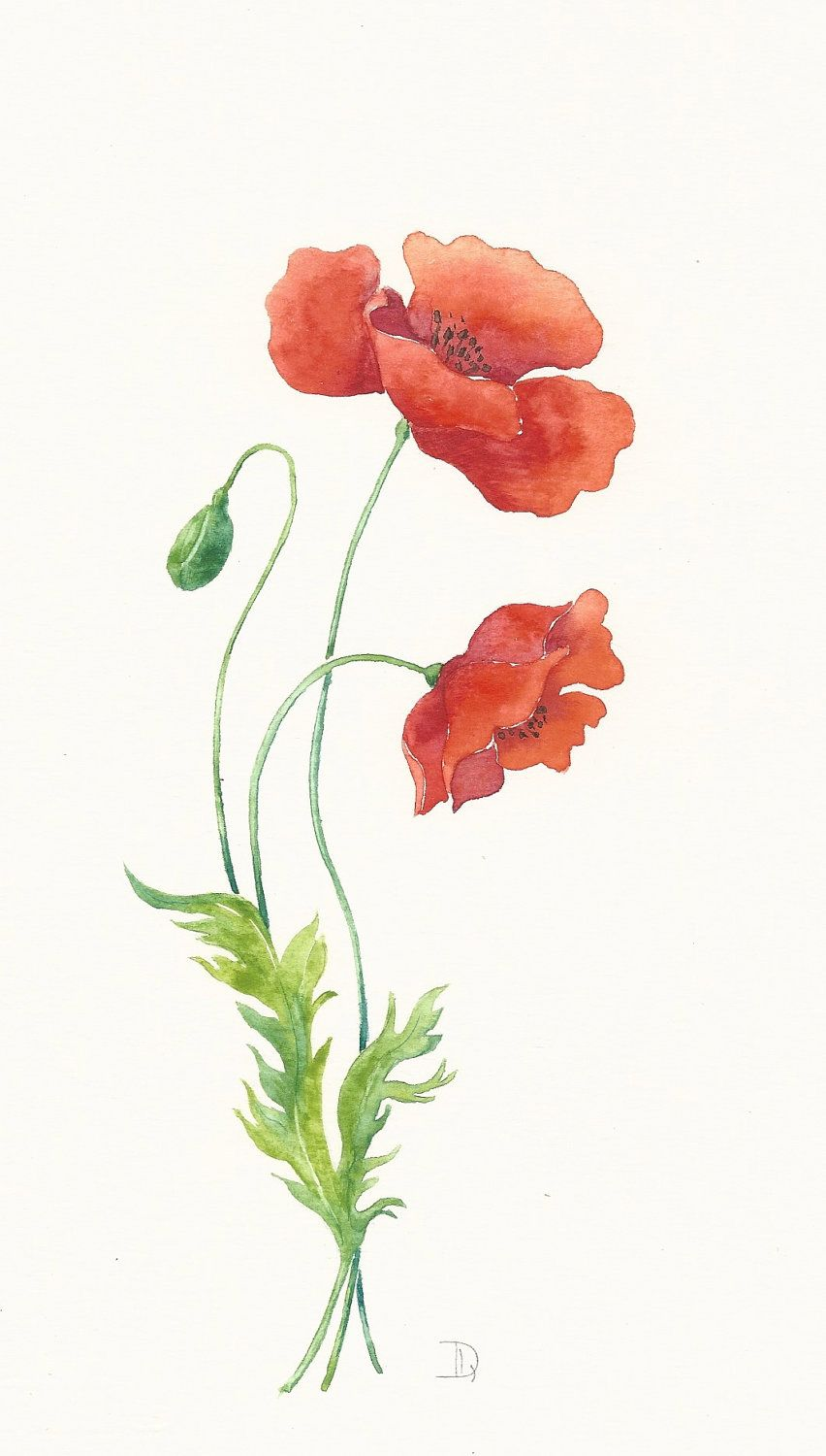 Original watercolor painting Poppy flowers | Flowers ...