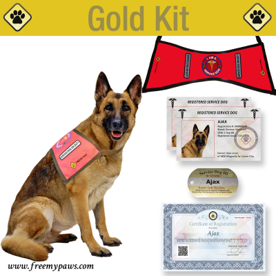 Gold Service Dog Identification Kit 100 Made In The Usa Service Dogs Service Animal Dog Identification Service Dogs
