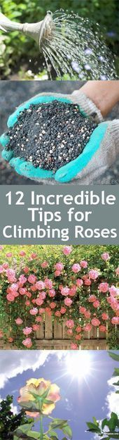 Front Garden Landscaping Ideas Australia Gardening Tips For Roses Gardening Ti