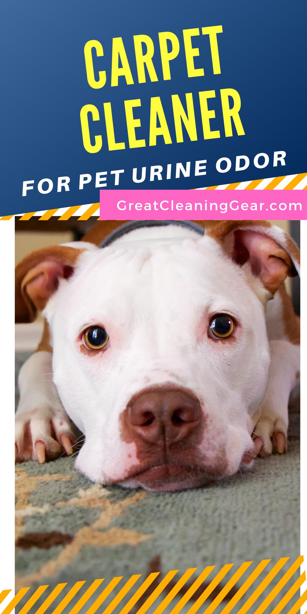 Best Carpet Shampooer For Pet Urine Pet Urine Carpet Cleaners Diy Carpet Cleaner
