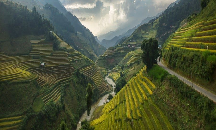 Rice Paddies - Vietnam   Travel