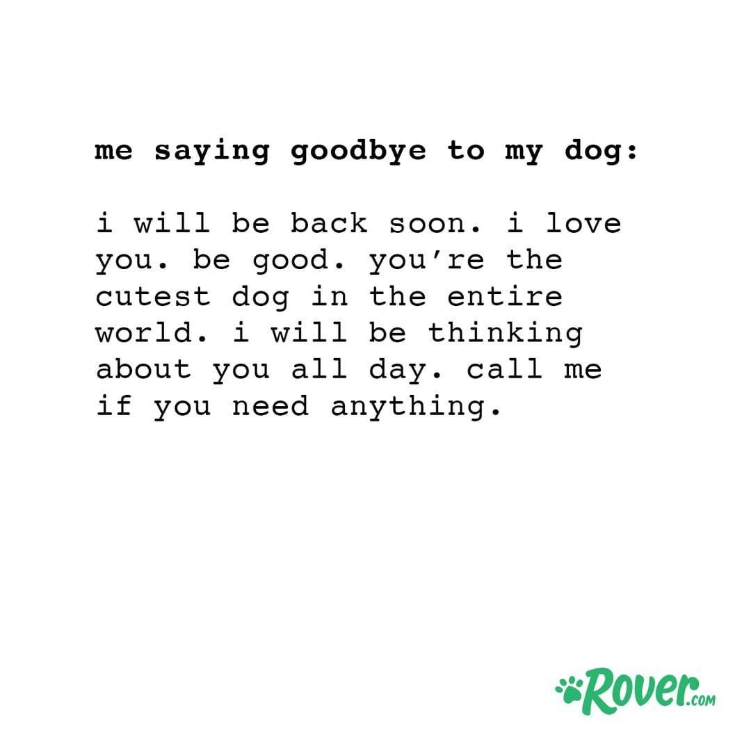 Every Single Time I Say Goodbye Funny Dog Memes Dog Quotes