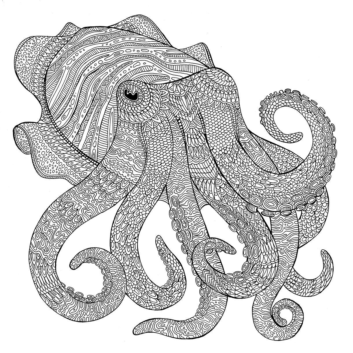 The Aquarium Colouring Book Cuttlefish Richard Merritt