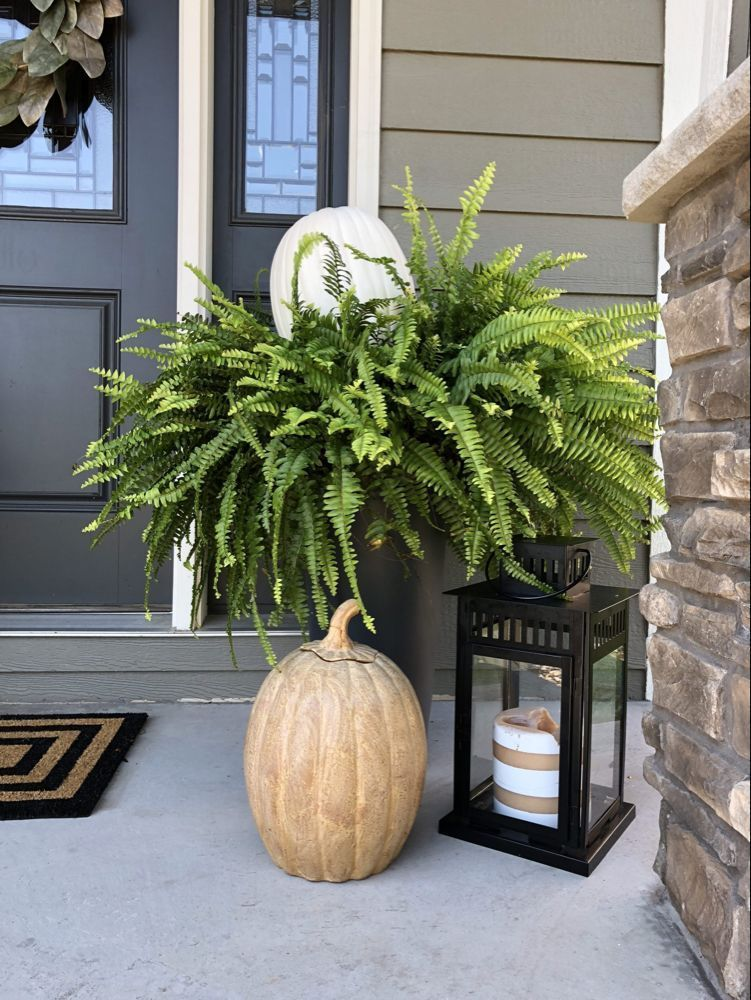 Simple Fall Front Porch Decor #fallfrontporchdecor Extend life of your Boston ferns by using white craft pumpkins. Clay pumpkins, and lantern for fall front porch display. #fall #frontporch #falldecor #fallfrontporchdecor Simple Fall Front Porch Decor #fallfrontporchdecor Extend life of your Boston ferns by using white craft pumpkins. Clay pumpkins, and lantern for fall front porch display. #fall #frontporch #falldecor #fallfrontporchdecor