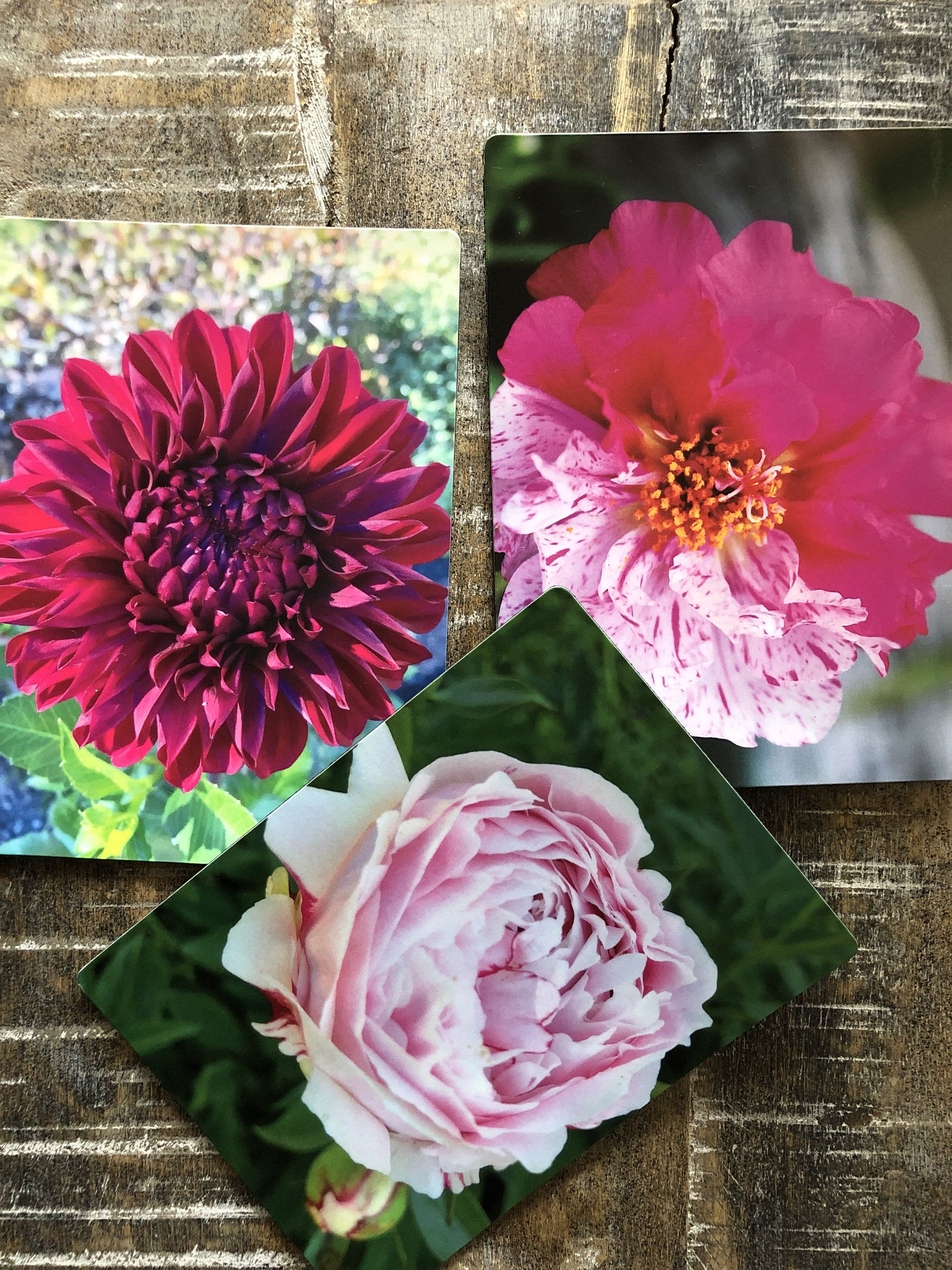 Excited to share the latest addition to my shop Refrigerator Magnet Summertime Pink Flower Collection Original Photography Ready to Ship Set of 3