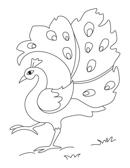 A dancing peacock coloring page | Download Free A dancing ...