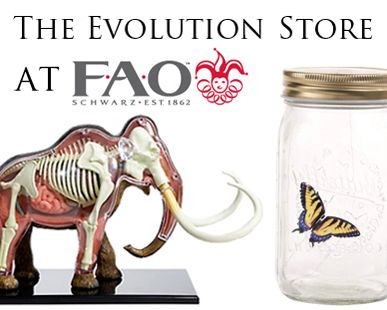 The Evolution Store at FAO Schwarz  // awesome.