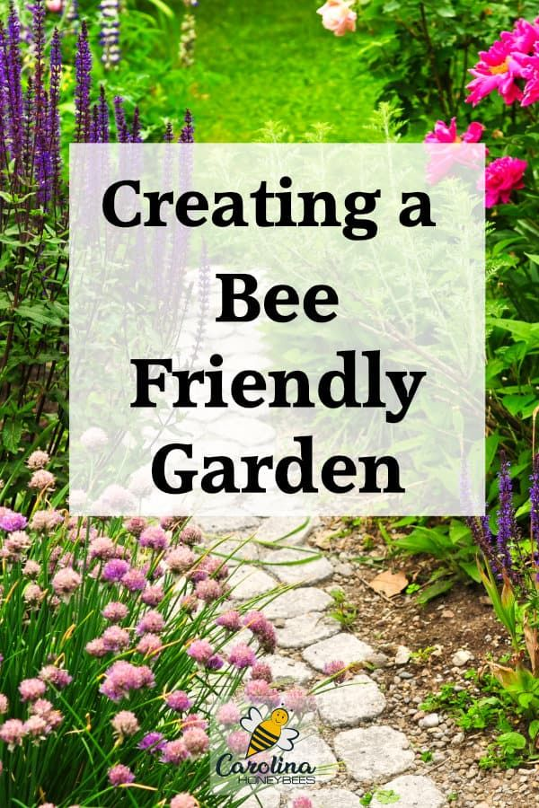 5 Easy Ways to Create A Bee Friendly Garden