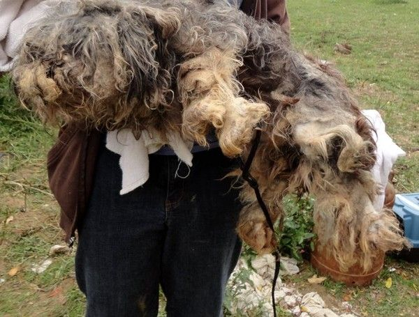Puppy Mill In Ohio Latest Dogs Rescued From Amish Farm Is