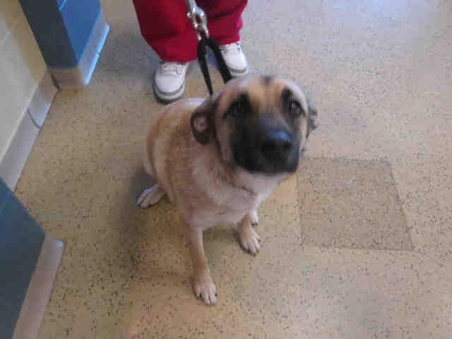 Adopt A Pet Humane Society Of Missouri Http X2f X2f Www Hsmo Org Humane Society Dog Adoption Adoption